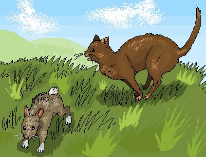 http://www.wildwarriors.narod.ru/articles/hunting/rabbit.jpg