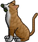 http://www.wildwarriors.narod.ru/wallpapers/pixel/thunderclan/medicinecat/leafpool.png