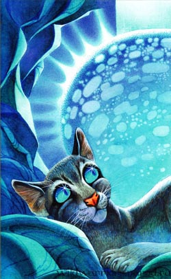http://www.wildwarriors.narod.ru/wallpapers/rucotc/cinderpelt_r.jpg